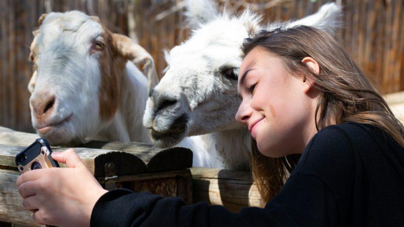 Quand réserver son billet pour un parc animalier ?